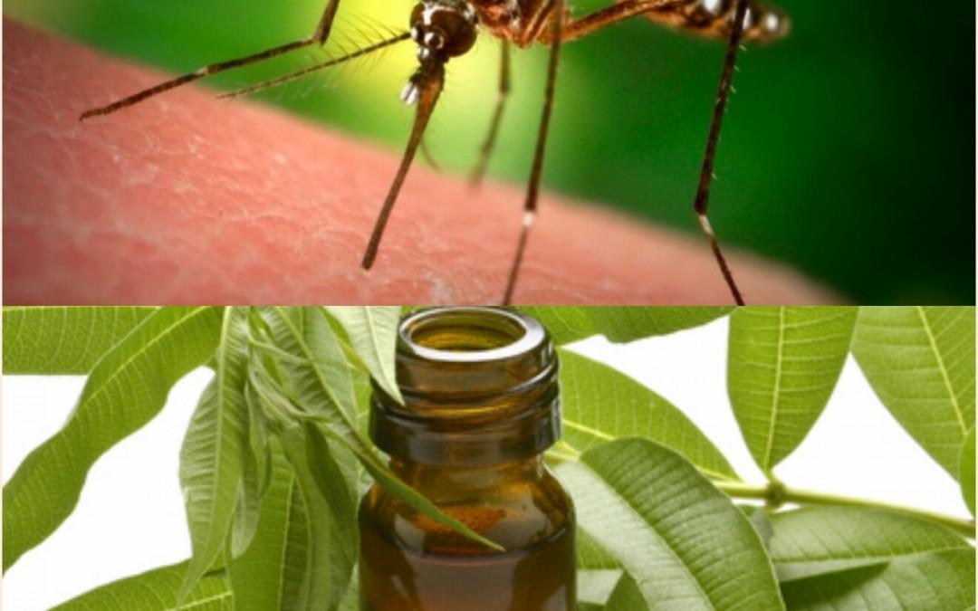 Votre arme naturelle anti-moustiques pour cet été…