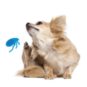 Précisions concernant l'utilisation des insecticides chez le chien