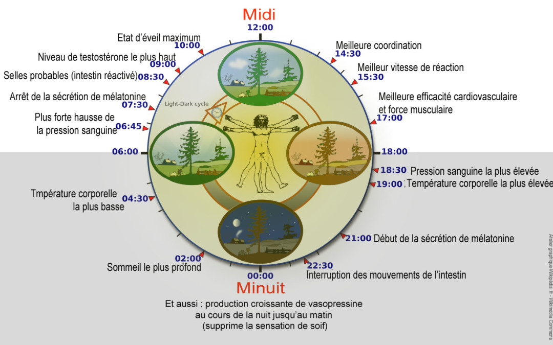 LA CHRONOTHERAPIE OU CHRONOPHARMACOLOGIE, LE BON MEDICAMENT AU BON MOMENT